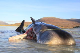 Facebook da Scottish Marine Animal Strandings Scheme
